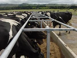 Dairy Tech Waikato Design Amp Build Feed Pads